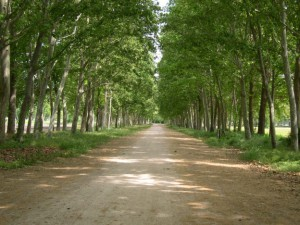 paseo_arbolado_aranjuez